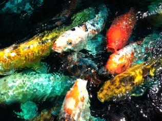 Rainbow Fish Pond