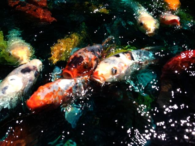 Rainbow Hungry Fish