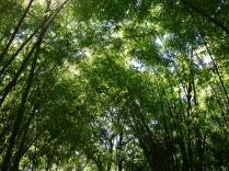 Green Canopy Bamboo